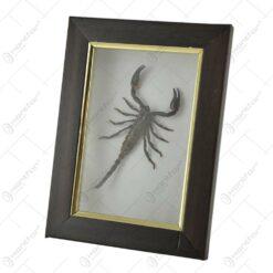 Tablou decorativ cu scorpion natural (Tip 1)