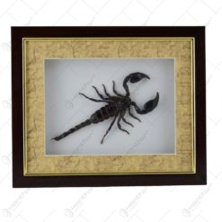 Tablou decorativ cu scorpion natural  (Tip 2)