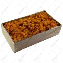 Muschi vegetal pentru aranjamente florale - Portocaliu