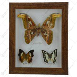 Tablou decorativ cu 3 fluturi naturali (Tip 2)
