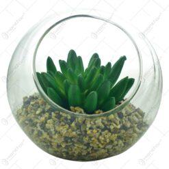Terariu in glob de sticla cu planta suculenta si pietricele (Model 2)