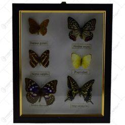 Tablou pentru perete - Design cu 6 fluturi