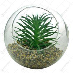 Terariu in glob de sticla cu planta suculenta si pietricele (Model 1)