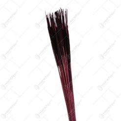 Plante uscate - Typha India 70 CM