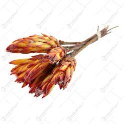 Buchet de floare Protea 35 CM