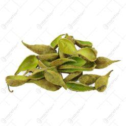 Plante uscate - Tutun salbatic