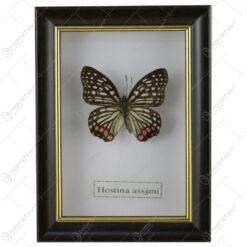 Tablou cu fluture 11x15 CM