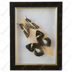 Tablou cu 2 fluturi si o frunza colorata 16x21 CM