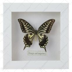 Tablou cu fluture 16x16 CM